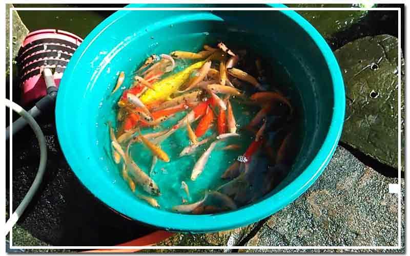 Kolam Ikan Bocor Ini Penyebab Dan Cara Mengatasinya Jasa Terdekat